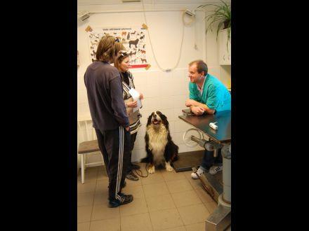 MVDr. Robert Kazarka – Veterinárna ambulancia obr. 5