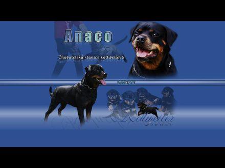 www.anaco.cz