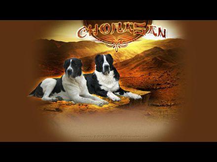 www.chorasan.com